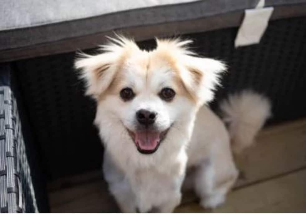 Dog dental health- oral health, smiling dog