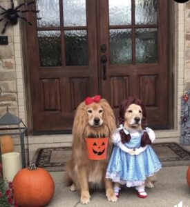 dog clothes - dog fancy dress, two dogs dressed for Hallloween