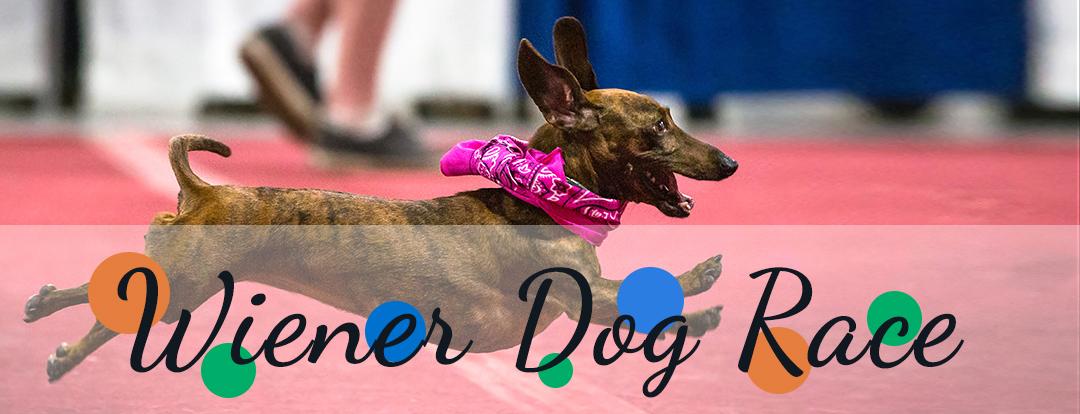 Wiener Dog Race