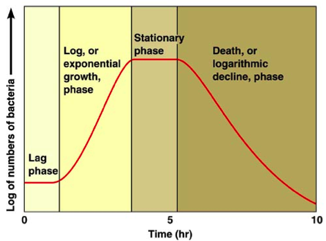 Growth curve of a bacteria colony