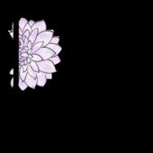 dn-organics-logo