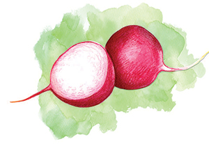 City Palate, guide to the good life in Calgary - eat this - 2019-05-06 - Radishes
