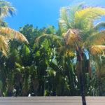 miami-south-beach-palm-trees
