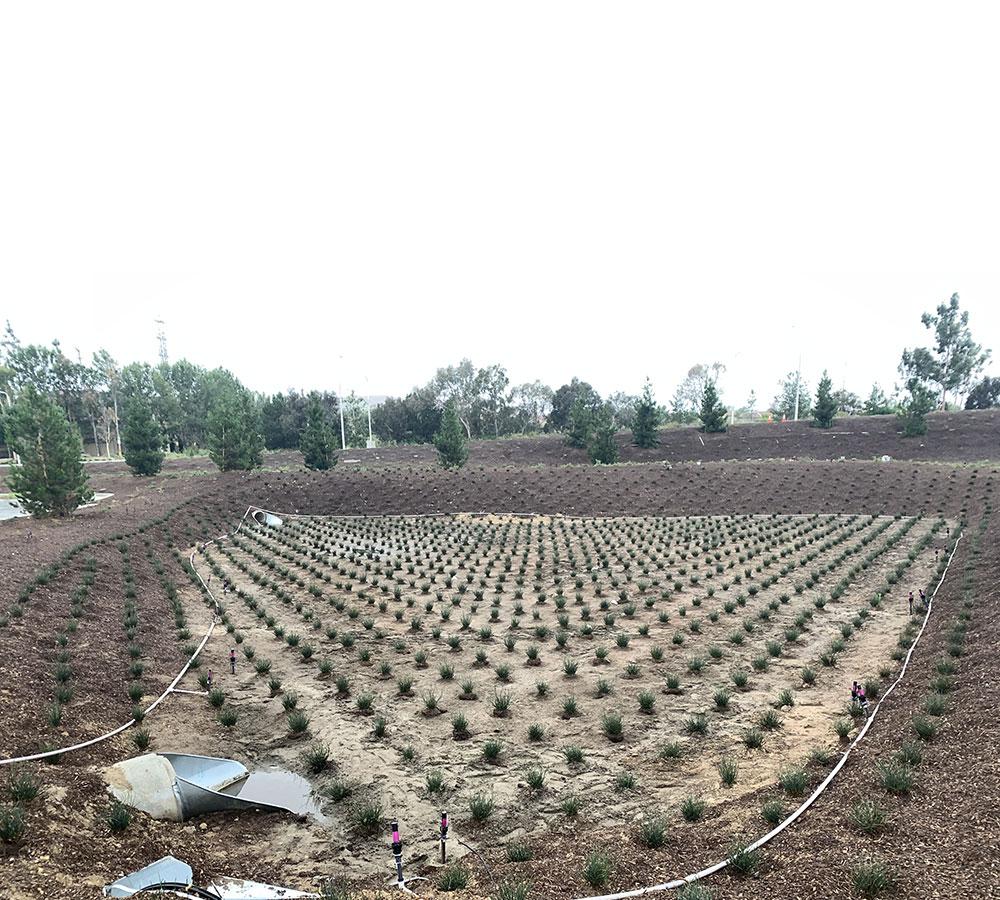 Bioretention-Basin-feat2