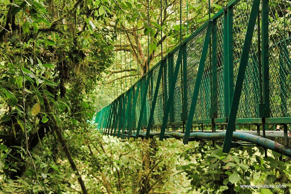 Hanging Bridges Tour
