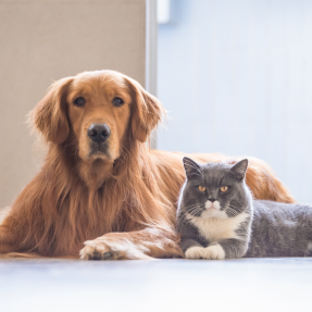 Can I use homeopathic remedies on my pet?