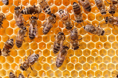 Beekeeping in Sandbridge
