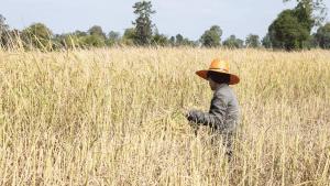 Women farmer part of sustainable future