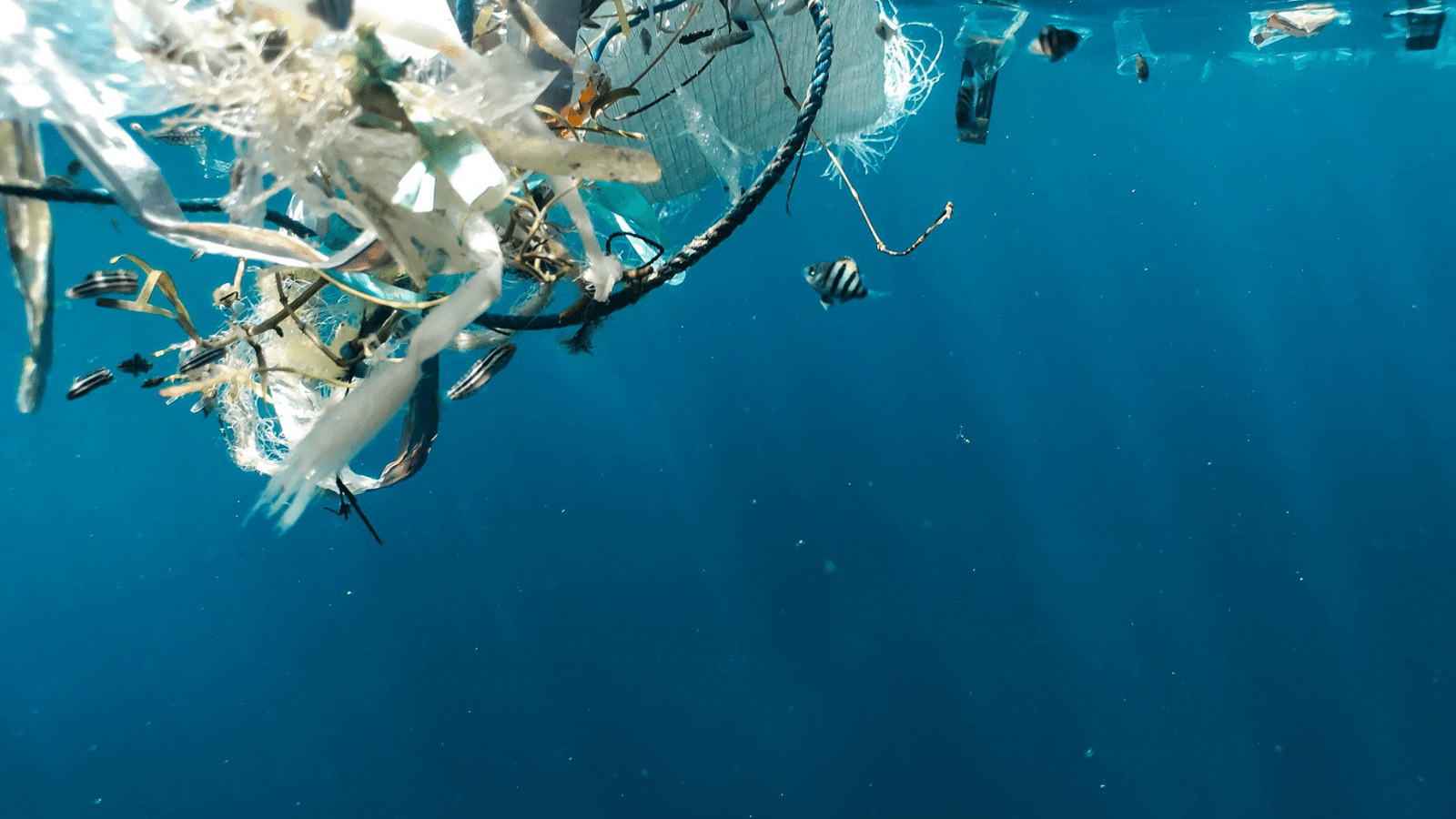 Read more about the article Phasing Out Plastic Pollution with India Plastic Challenge Hackathon