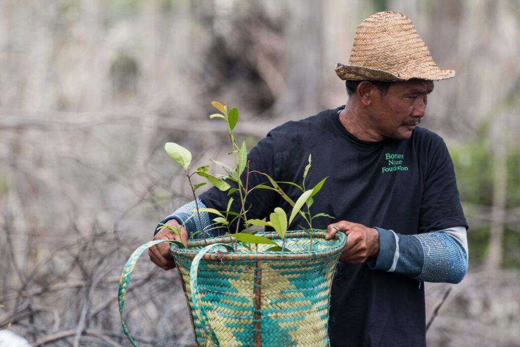 Planting-October-2016-1-Sabangau-Pau-Brugues-Sintes-lowress-2048x1365