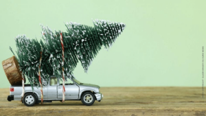 fresh vs artificial Christmas tree (image copyright : Olger Kriger Via EuroNews) | ChangeMakr Asia