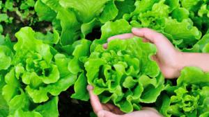 Vegepod Grow your own vegetables | ChangeMakr Asia