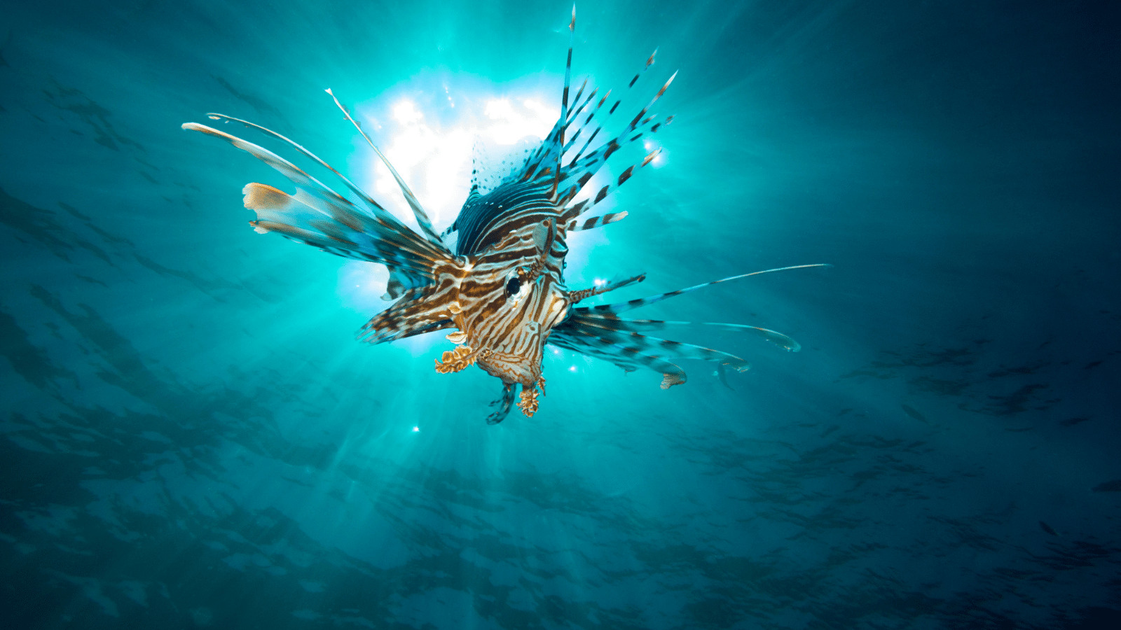 Read more about the article Beneath The Waves : Shedding Light On The Beauty And Wonder Of The Ocean