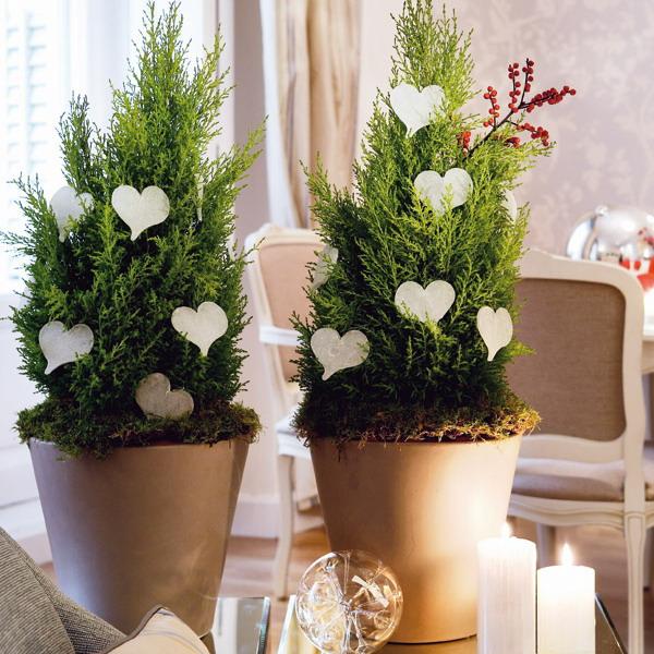 creative decoration for house plant (image credit : Pinterest)   ChangeMakr Asia