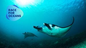 UNLEASH Race For Oceans