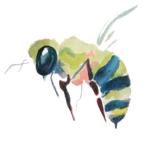 bee (1)