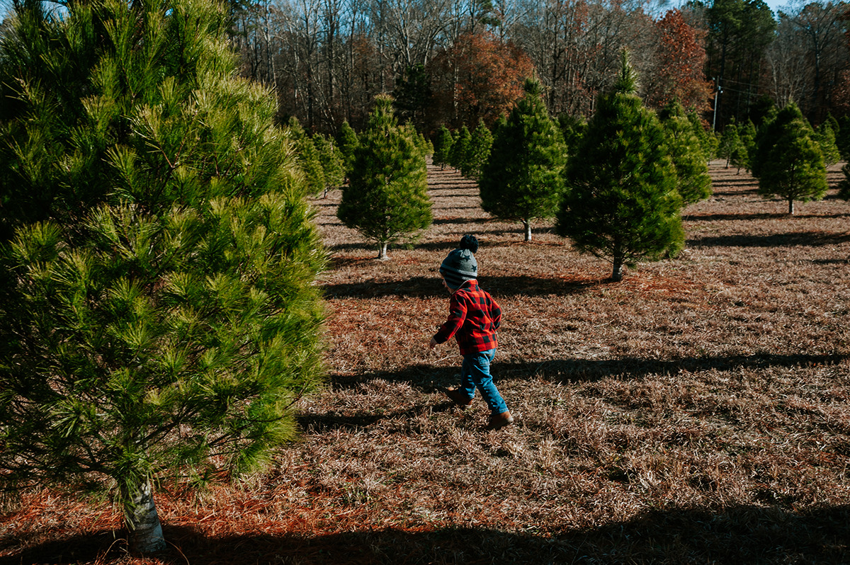 Holiday Traditions: Christmas Tree cutting in Zuni, Virginia