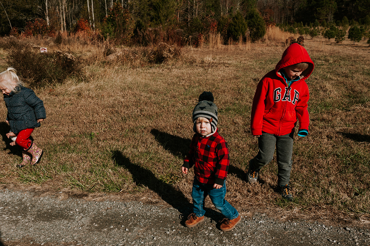 children searching for perfect Christmas tree