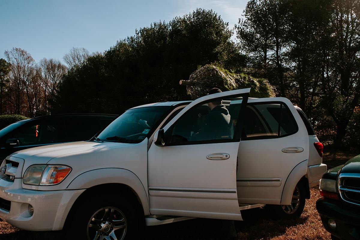 tying Christmas tree on car
