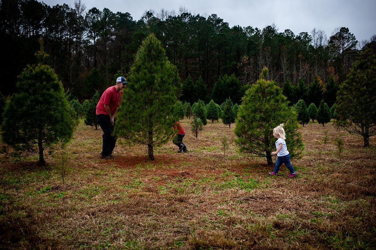 Peninsula Christmas tree farm in Zuni, Virginia