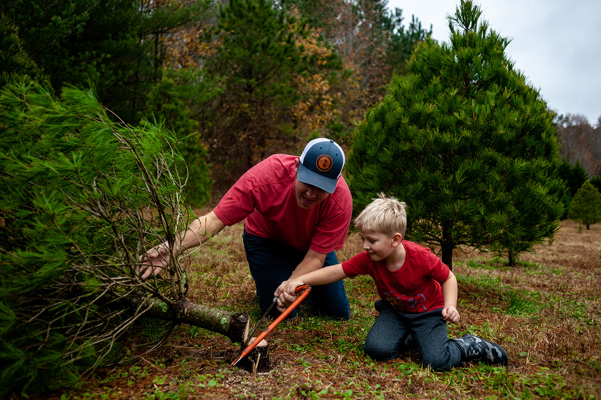 father and son cutting down Christmas tree