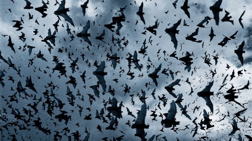 GTY_swarm_of_bats_BE9805-001_jt_131124_16x9_992