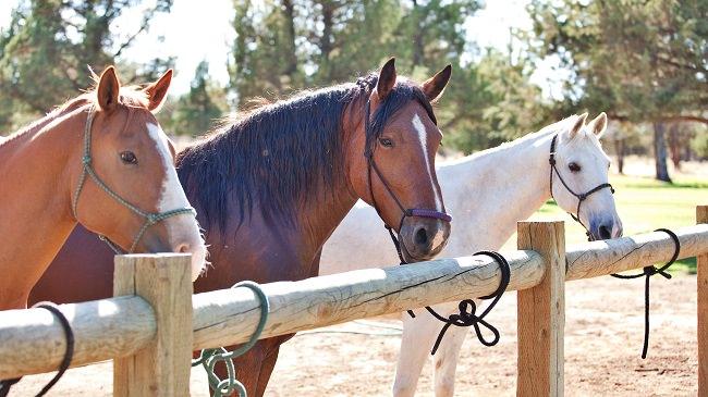 Horseback-Riding-in-Central-Oregon-Eagle-Crest-Horses