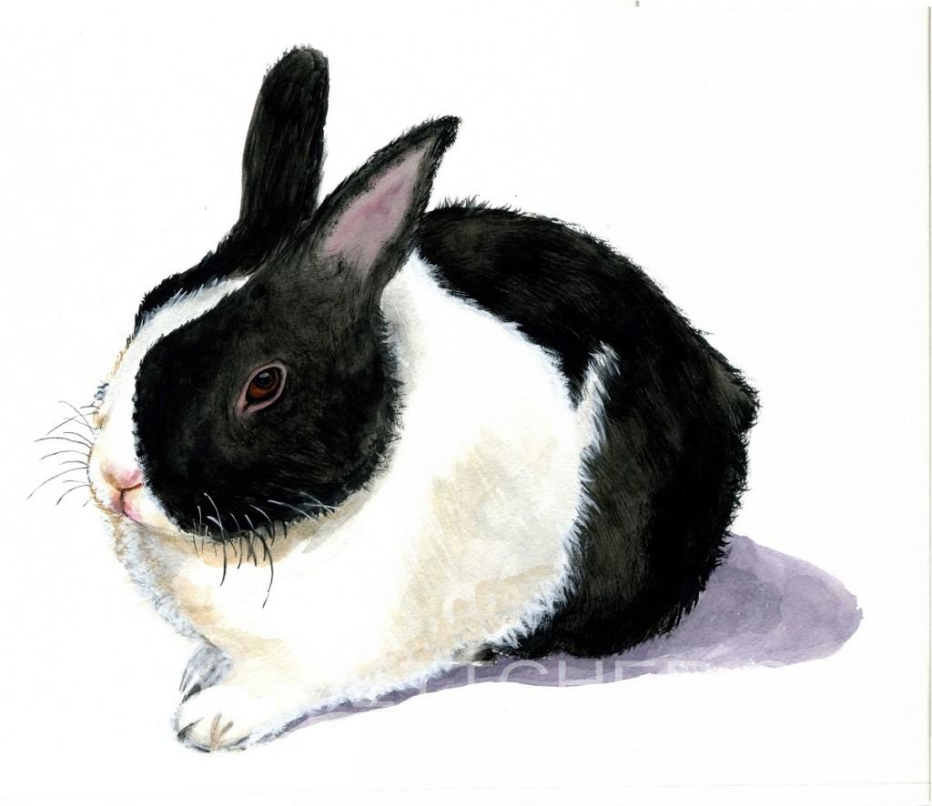 Blacka nd White Rabbit