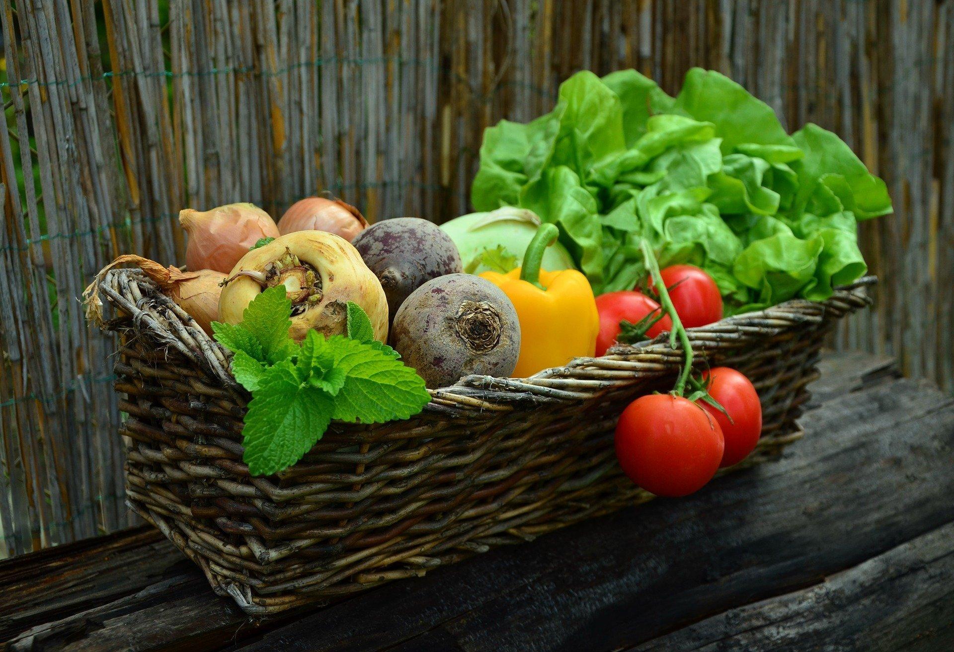 plant basket
