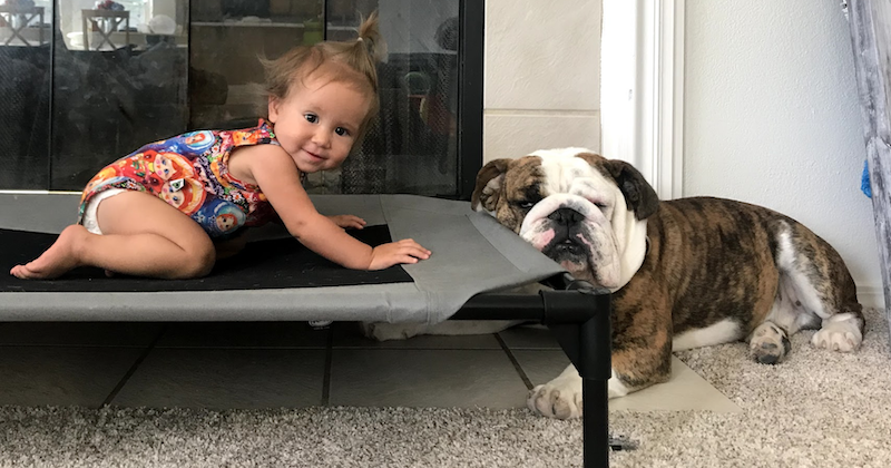 baby on dog bed