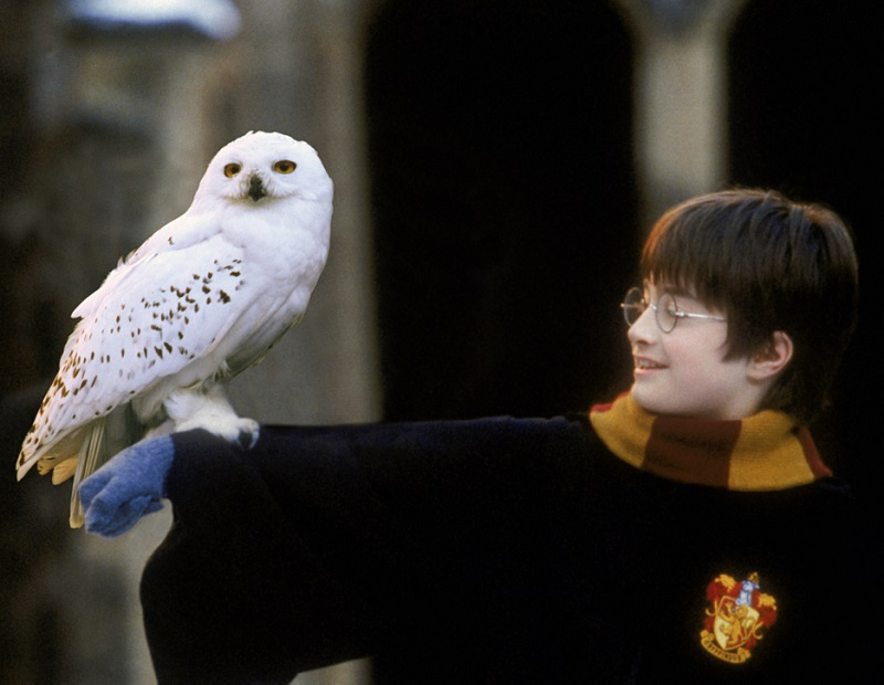 Hedwig and young Harry Potter (<i>Harry Potter and the Philosopher's Stone</i>