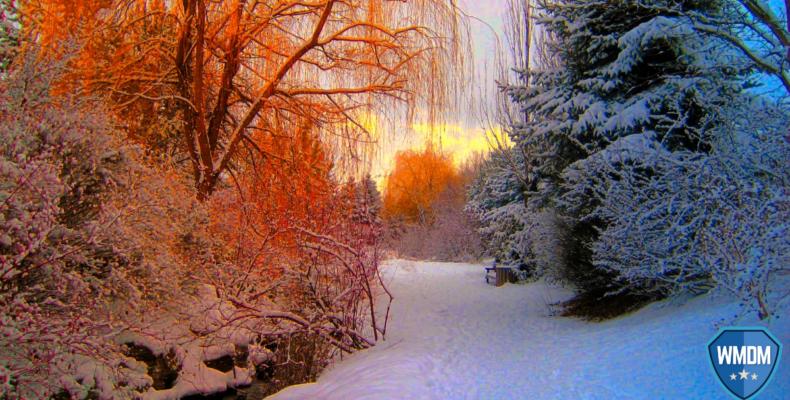Seasonal marketing. Winter scene of snow and trees gleaming in sunlight.