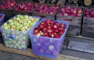 Apples going to Market