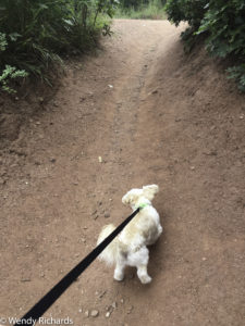 On to the red path, sniffing his way along