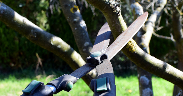 6 Questions to Ask When Choosing Tree Care Services