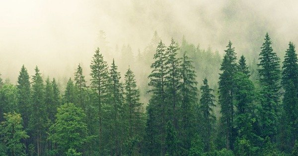 How to Care for Trees: Pine Trees vs. Deciduous Trees