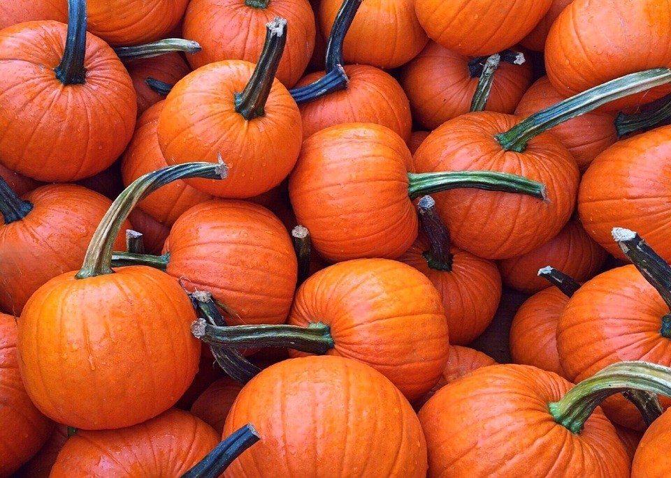 Everybody Loves Nashville pumpkins