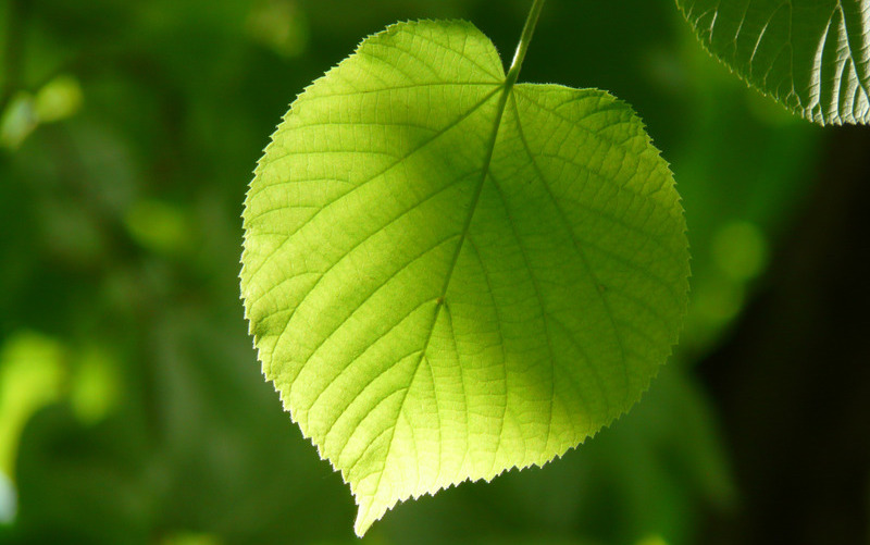heart shaped leaf to symbolize natural hormones