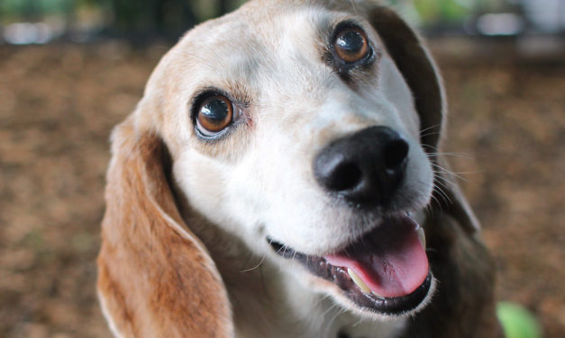 Looking for Love at Any Age: Atlanta Humane Society has older pets