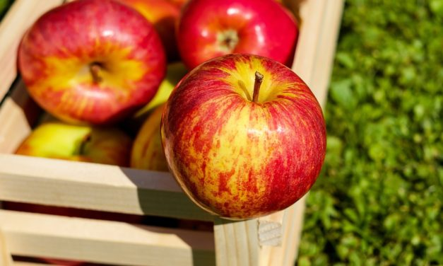 A is for Apple: Canning, picking and celebrating