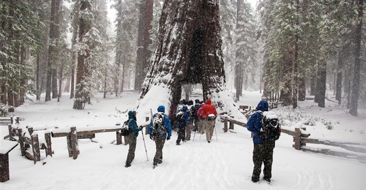 Road Scholar: Top 8 National Parks to Visit in Winter