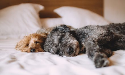 Get Your Rest: The importance of sleep