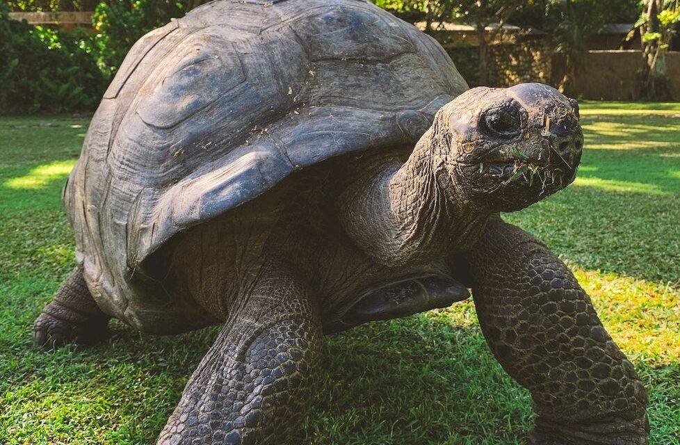 Live like a Turtle and Keep your Shell Thick