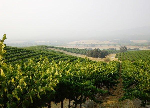 District 7 Hames Vineyard, Monterey County, Ca