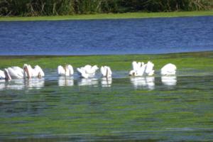 Oso Flaco Lake guadalupe nipomo san luis obispo county, ca