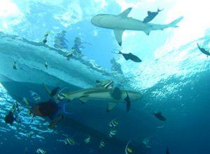 Swimming-sharks