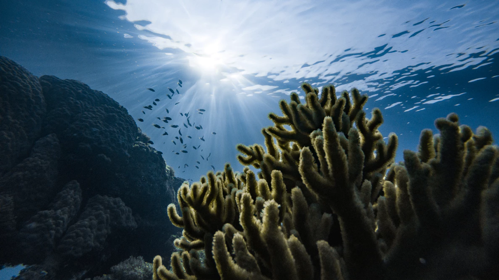 El Capitan underwater