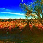 Sculpterra Winery and Sculpture Garden