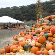 Fall in Love with Fall on the Central Coast