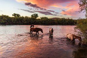 Mesa Arizona Horses in Lake